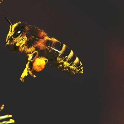 Mensch und Insekt – ein ambivalentes Verhältnis